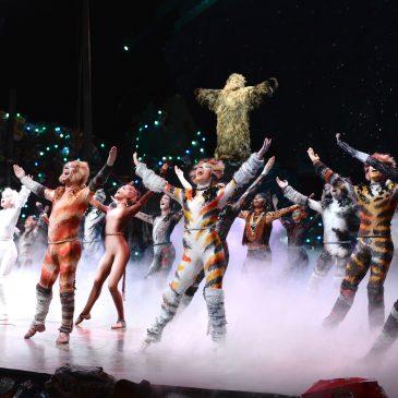 Märchenhaftes im Theater: CATS!